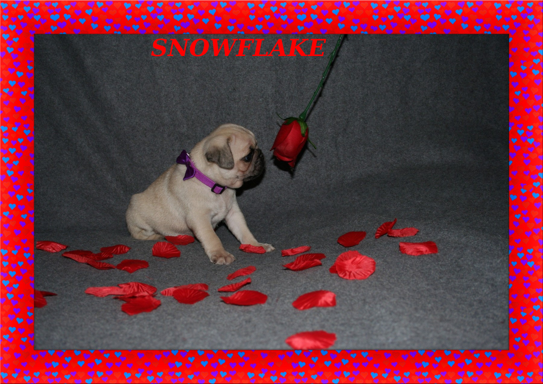 Hearts Picture Frame: https://www.tuxpi.com/photo-effects/heart-frame